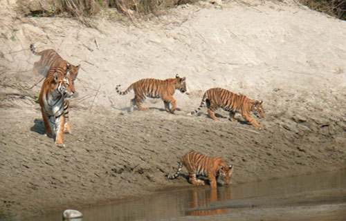 Safari Tour in Bardia National Park